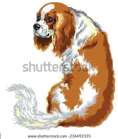 blenheim king charles spaniel , chestnut color, image isolated on white - stock vector