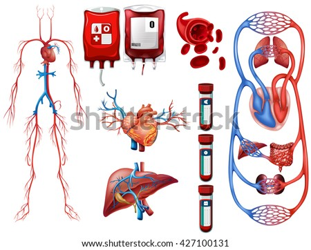 Blood types and breathing system illustration - stock vector