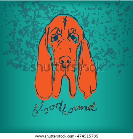 Bloodhound Stock Images RoyaltyFree