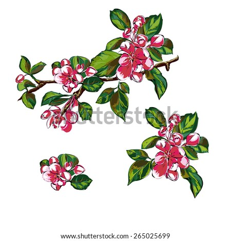 Blooming branches. Individual objects on a white background. - stock vector