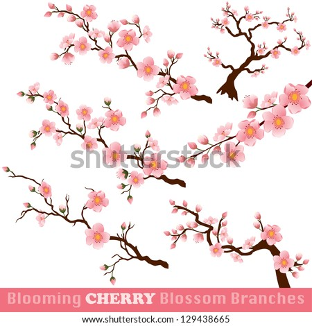 Blooming Cherry Blossom Branches Isolated on White. Vector