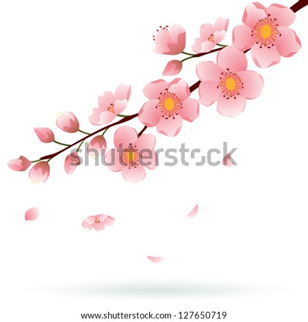 Blooming Cherry branch with falling petals isolated on white. Vector