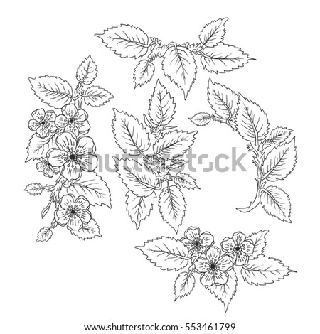 Blossom branch with leaves, flowers set. Hand drawn illustration