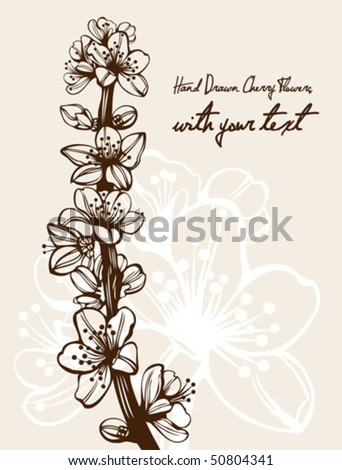 Blossom cherry flowers branch high quality detailed drawing - stock vector
