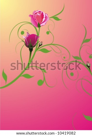 Blossoming a rose - vector illustration - stock vector
