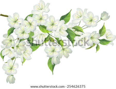Blossoming branch of apple tree - stock vector