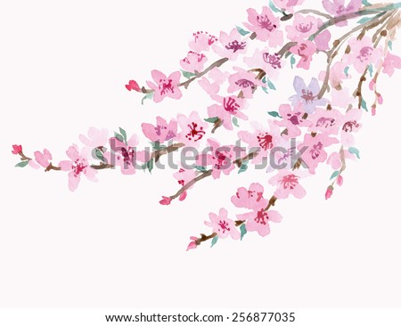 Blossoming cherry branch isolated on a white background. Watercolor Spring background. Vector illustration