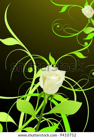 Blossoming rose - stock vector