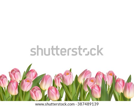Blossoming tulips decorative border over white background with copy space. EPS 10 vector file included - stock vector