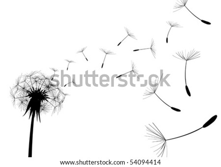 Blow Dandelion on white background - stock vector