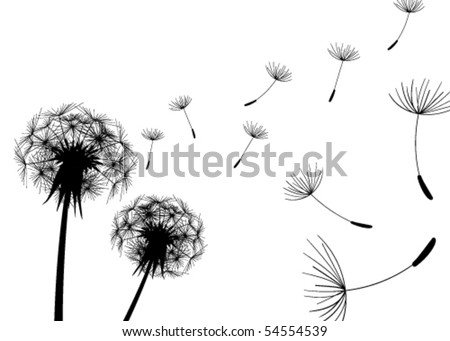 Blow Dandelions on white background - stock vector
