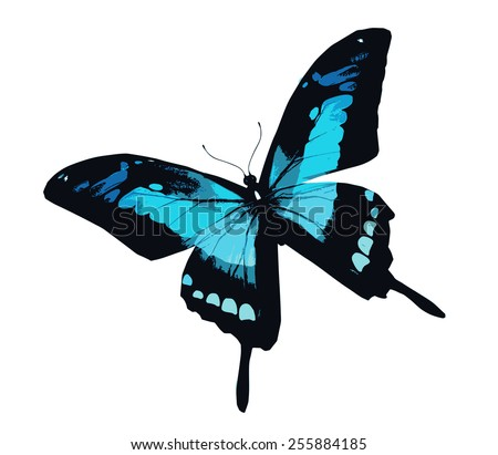 Blue butterfly flying, isolated on white - stock vector