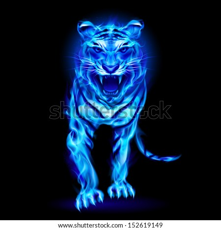 Blue fire tiger isolated on black background.