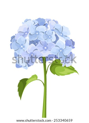 Blue hydrangea flowers. Vector illustration. - stock vector