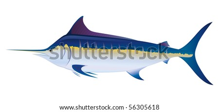 """Blue Marlin Swordfish (Makaira nigricans) saltwater fish.   """"Full compatible. Created with gradients."""" - stock vector"""