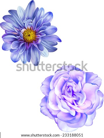 Blue Mona Lisa flower, Purple rose flower, Blue Spring flowers . Isolated on white background.    - stock vector