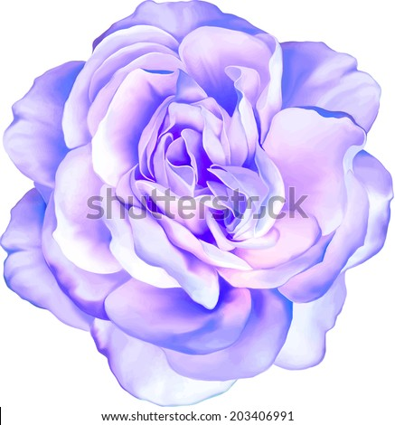 Blue purple rose flower isolated on white background - stock vector