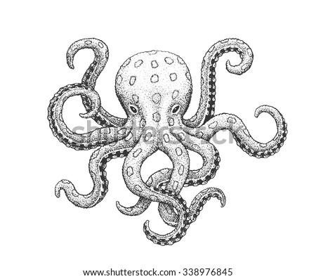 blue ringed octopus classic drawn ink illustration isolated on white background