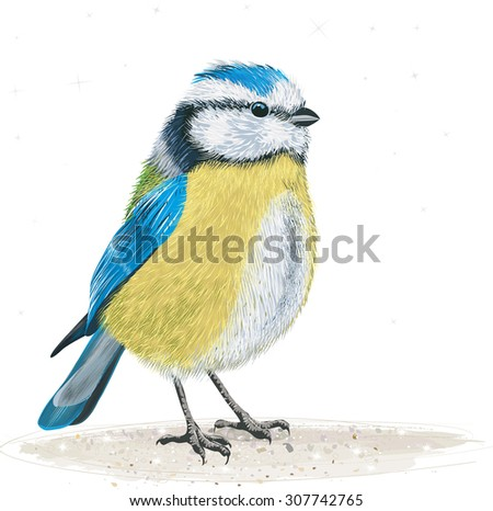 Blue tit on the ground - stock vector