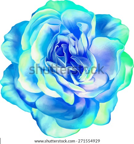 Blue turquoise Sexy and beautiful and rose bud isolated on white background. Vector illustration - stock vector