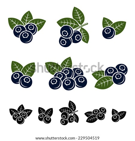 Blueberries set. Vector - stock vector