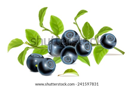 Blueberries with leaves. Vector illustration. - stock vector