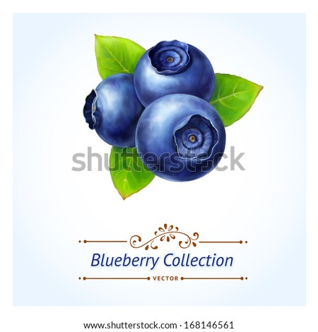 Blueberry, leaves and berries isolated on white background. Realistic digital paint. Vector illustration. - stock vector