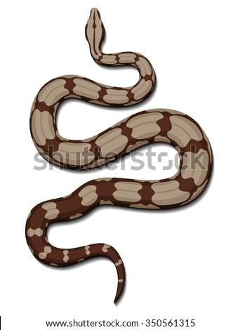Boa snake vector. - stock vector