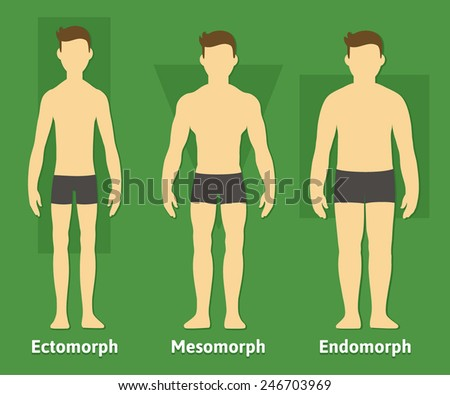 Three Types of Bodies Body Types Diagram With Three