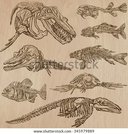 BONES, SKELETONS and Skulls of some (Under)Water Animals. Collection of an hand drawn vector illustrations. Freehand sketching. Each drawing comprise a few layers of lines. Background is isolated.