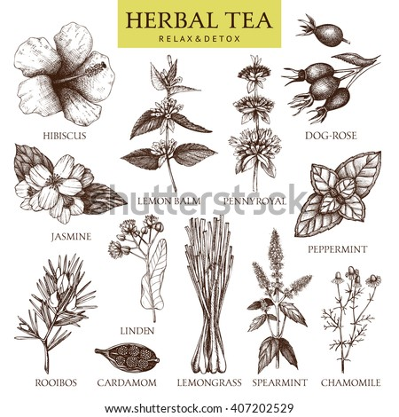 Botanical collection of hand drawn herbal tea ingredients. Decorative vector set of vintage medicinal herbs and spice sketch isolated on white. - stock vector