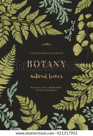 Botanical illustration with leaves on a black background. Boxwood, seeded eucalyptus, fern, maidenhair. Engraving style. Design elements. Vector. - stock vector