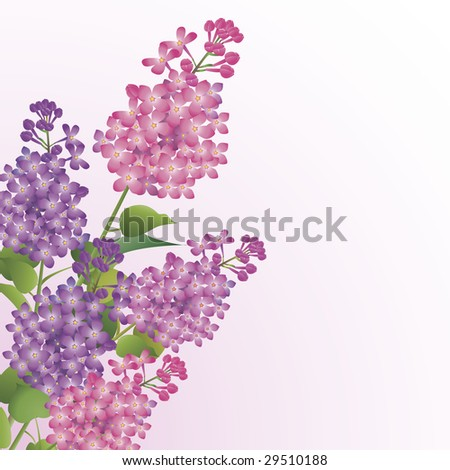 Bouquet of beautiful lilac blossoms against white background - stock vector