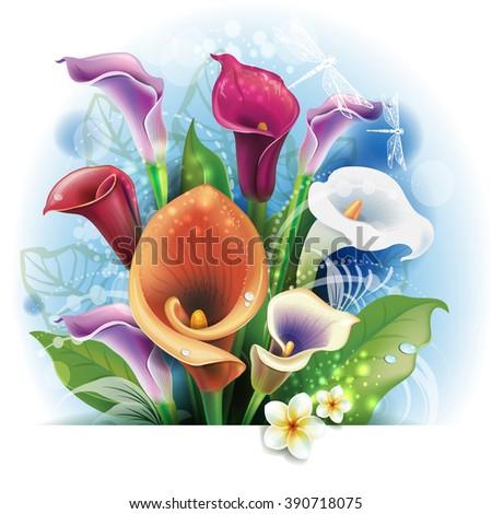 Bouquet of Calla lilies - stock vector