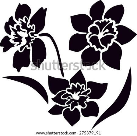 Bouquet of narcissus. Silhouette image of flowers. - stock vector