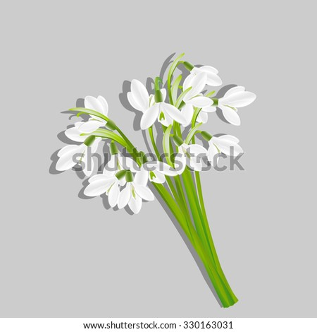 Bouquet of snowdrops isolated on grey background . Spring flowers. Useful for congratulation, greeting, invitation and postcard. Vector, EPS 10