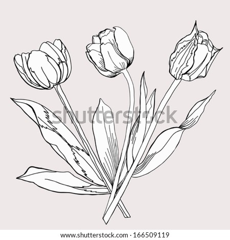 Bouquet of Tulip. Sketch Black and White. Vector illustration