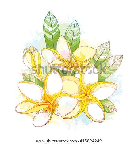 Bouquet with ornate Plumeria or Frangipani flower and leaves on the white background with blots in pastel. National flower of Laos and Bali. Vector floral elements in contour style for summer design.  - stock vector