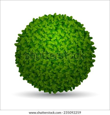 boxwood bush isolated (eps 10) - stock vector