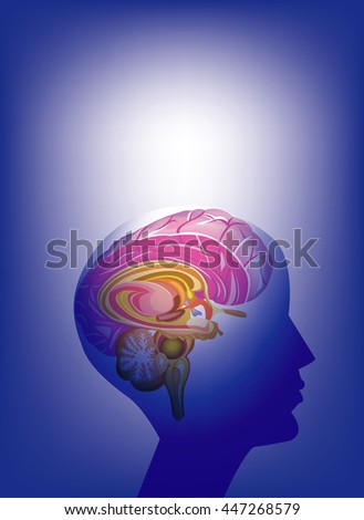 Brain, All elements are in separate layers color can be changed easily.