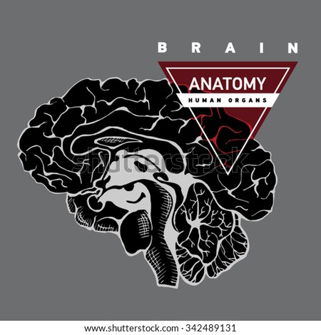 Brain anatomy. Human brain lateral view. Hand drawing illustration with typography. - stock vector