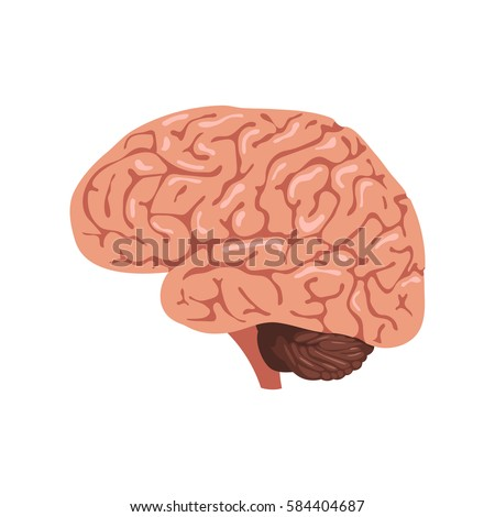 Brain Anatomy Icon Human Internal Organs Stock Vector 584404687 ...
