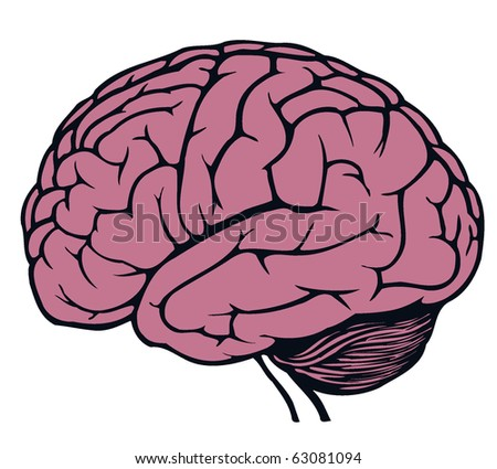 brain for web design - stock vector
