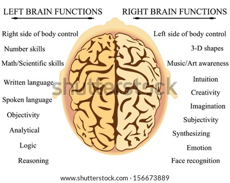 Brain Hemisphere Functions vector - stock vector