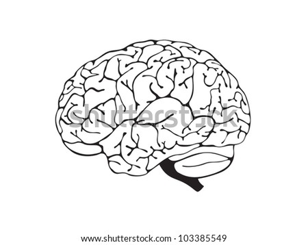 brain is a black and white side view - stock vector