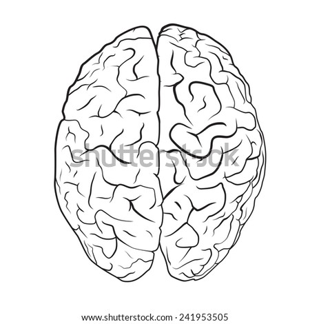 Brain on white background. EPS10 vector. - stock vector