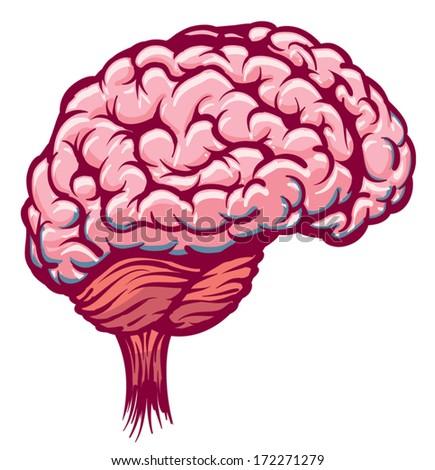 Brain Organ - stock vector