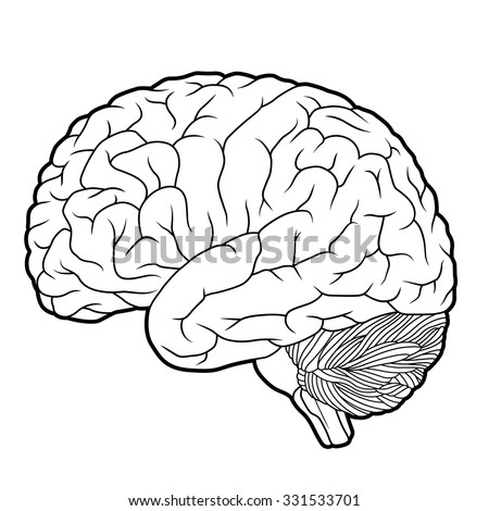 brain outline drawing - photo #34