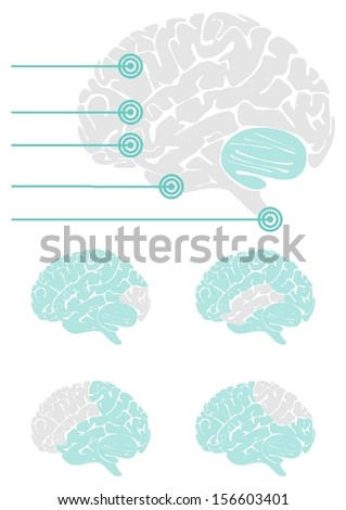 brain parts healthcare medical gray turquoise illustration on white background - stock vector