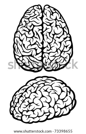 Brain. Set of Two Views. Vector Illustration - stock vector